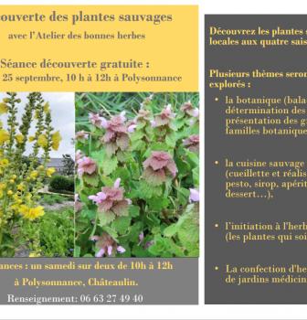 Atelier de découverte des plantes sauvages